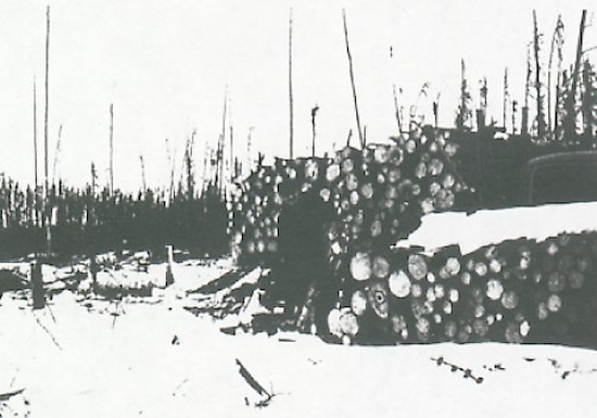 Brothers logging.