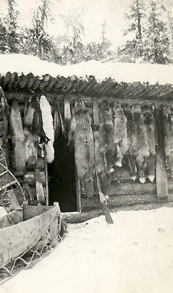 Ed's Cabin with Fox, Wolf, Otter, Marten and Mink Pelts