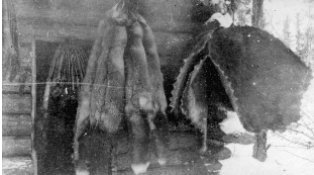 Photograph of Animal pelts.
