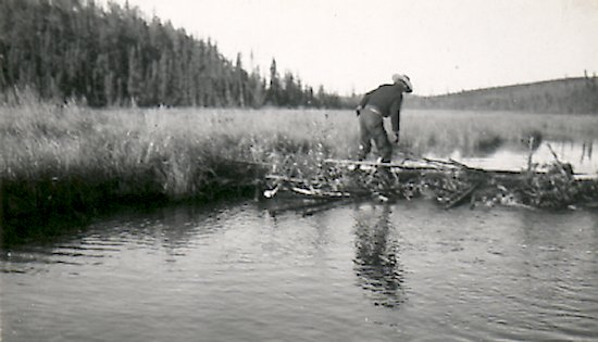 Fred Darbyshire walking on a beaver dam