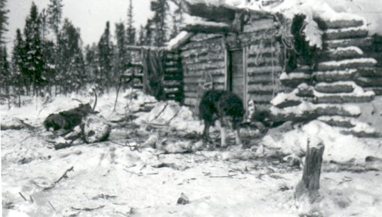 Trapping Cabin and sleigh dogs