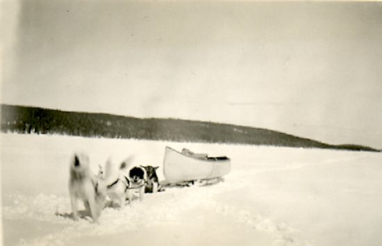 Dog team with canoe on sled in case of bad ice <BR> heading south in the spring