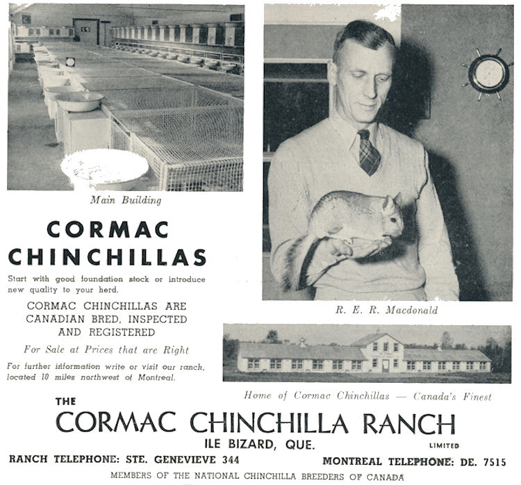 Cormac Chinchilla Ranch Advertisment